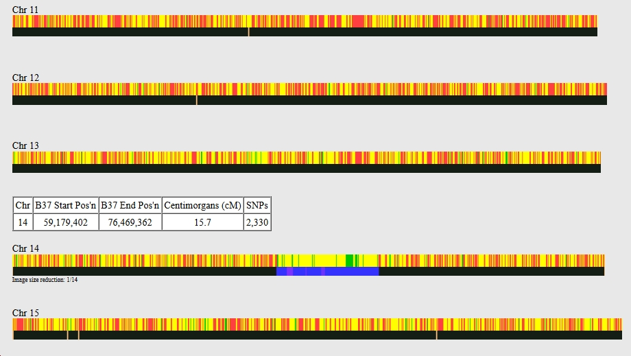 Screen grab from GEDmatch showing part of a One to One comparison in the chromosome browser